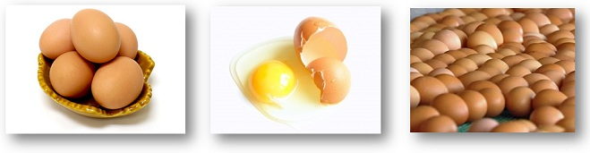 Fresh Brown Chicken Table Eggs for Export