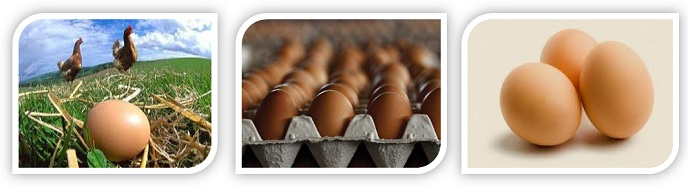 Egg Export / Egg Supplies - Malaysia Egg for export.